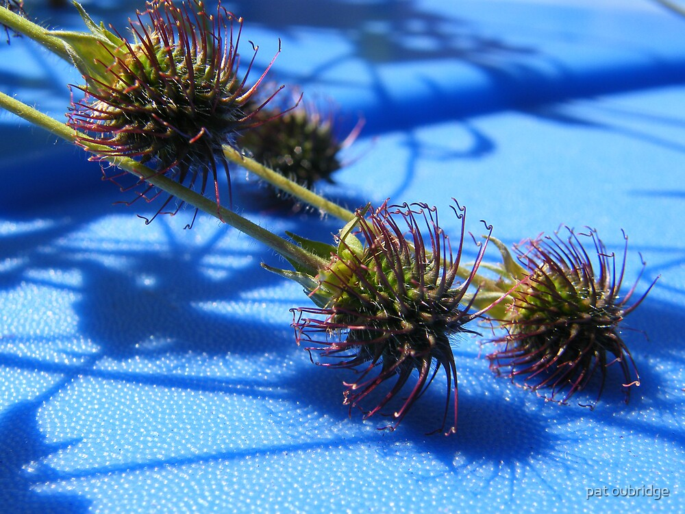Seed Pods by pat oubridge