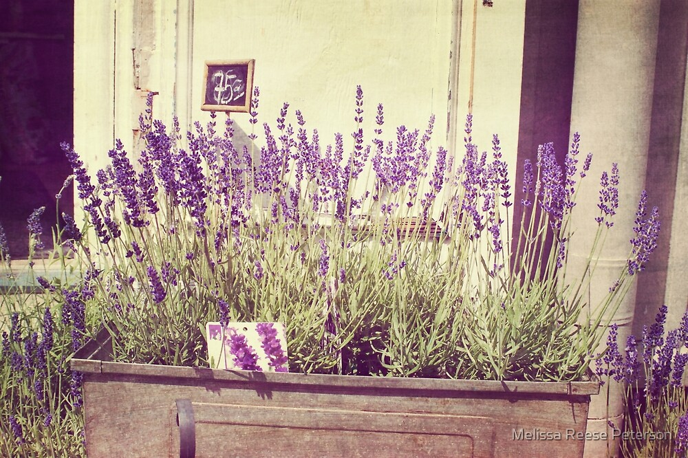 Lavender Flower Market by Melissa Reese Peterson