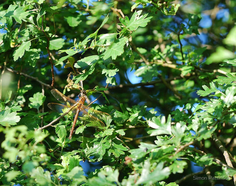 Dragonfly by Simon Pattinson