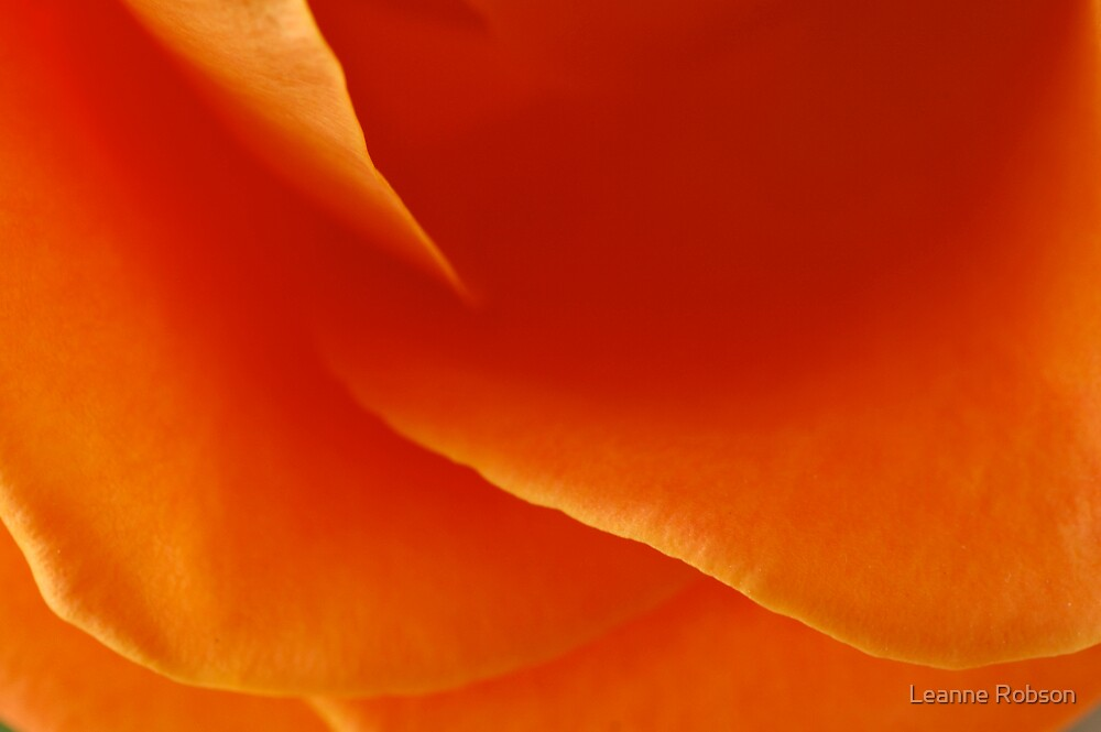 Orange Delight by Leanne Robson