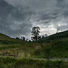 Lone Tree in Wales by Ann Garrett