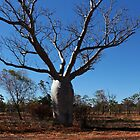 An enormous Boab Tree at Renner Springs by myraj