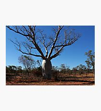 An enormous Boab Tree at Renner Springs Photographic Print