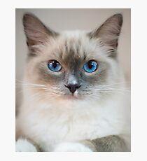 White Kitty With Blue Eyes Photographic Print