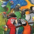 Macaws by Skye Elizabeth  Tranter