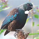 Tui.... do you think I look cute without a tail...........?! by Roy  Massicks