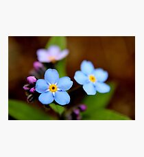 Blue Forget-me-nots I Photographic Print