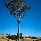 A Big Tree on a Little Country Road by Clare Colins