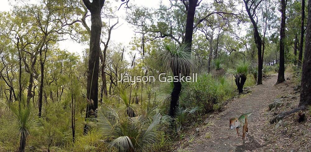 Hypsilphodon at Mt Archer by Jayson Gaskell