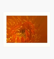 Orange Trollius Stamen Macro Art Print