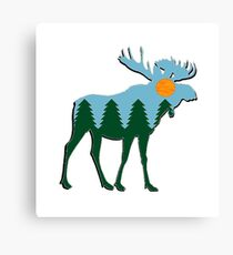 Moose Main  Canvas Print