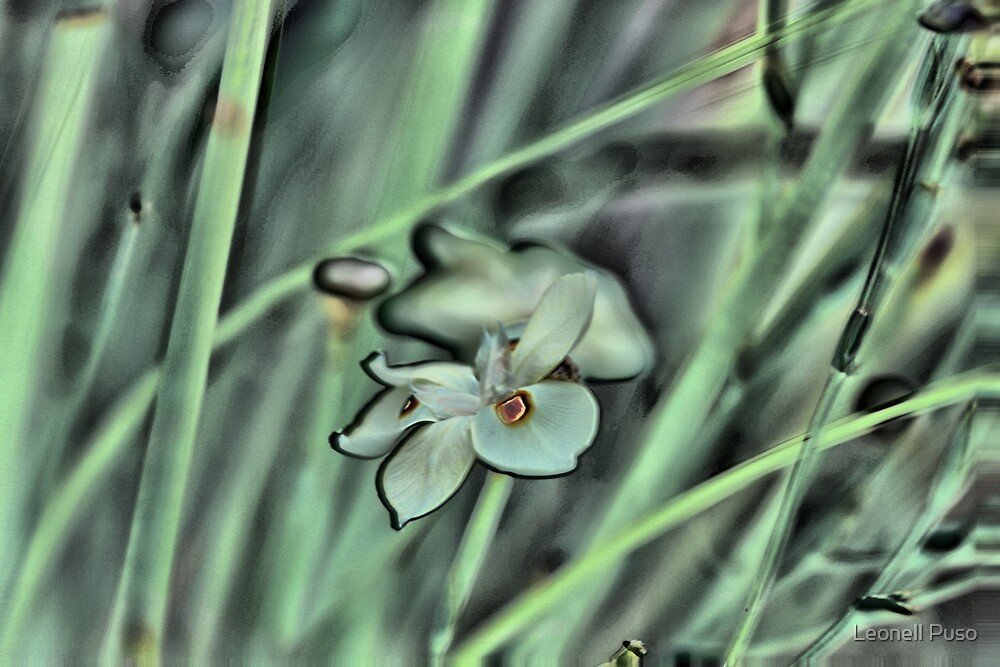 Ben's Flower the 2nd by Leonell Puso