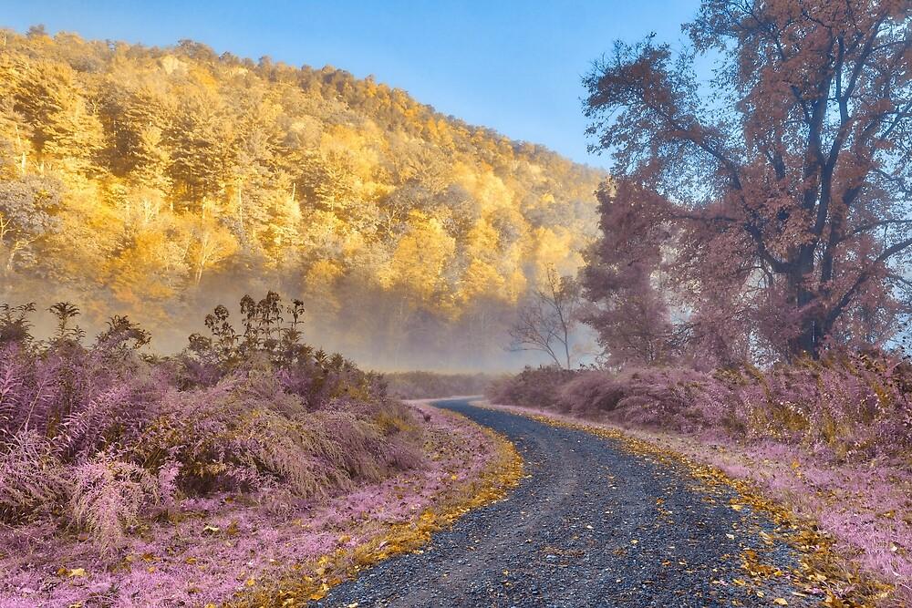 Misty McDade Trail - Gold Lavender Fantasy by Nicolas Raymond