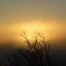 sunrise through the fog by byzantinehalo