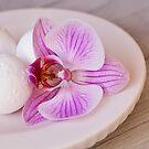 Zen style pink orchid still life  by artsandsoul