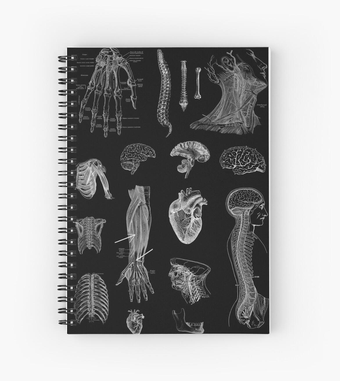 Vintage Anatomie Print von StilleSkygger