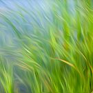 Reeds blowing in the wind abstract by stuwdamdorp
