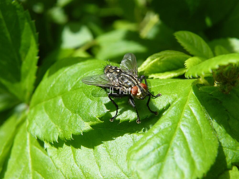The Fly by JLTaft