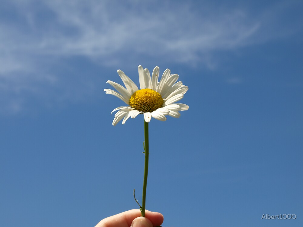 NC a daisy by Albert1000