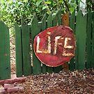 Life by Jessie Harris