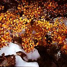 Fagus in the Snow 1 by Andrew Smyth