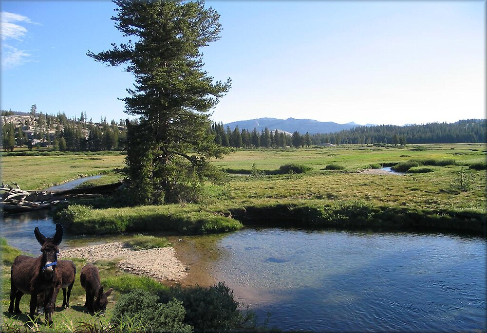 937B-Burro Meadows by George W Banks
