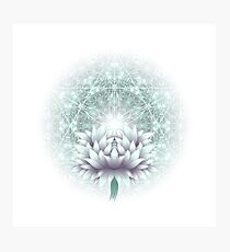 Tibetan flower Photographic Print