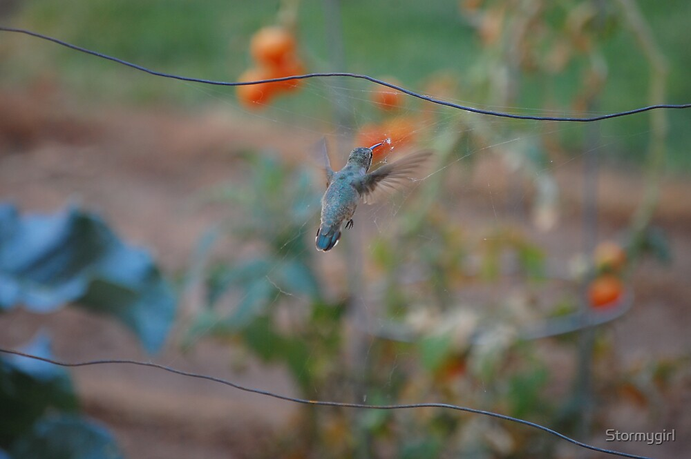 Humming Bird 2 by Stormygirl
