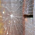 The Spider's Web by Melissa Contreras