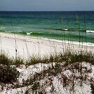 Beachcombing by Jessie Harris
