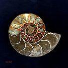Ammonite by Dana Roper