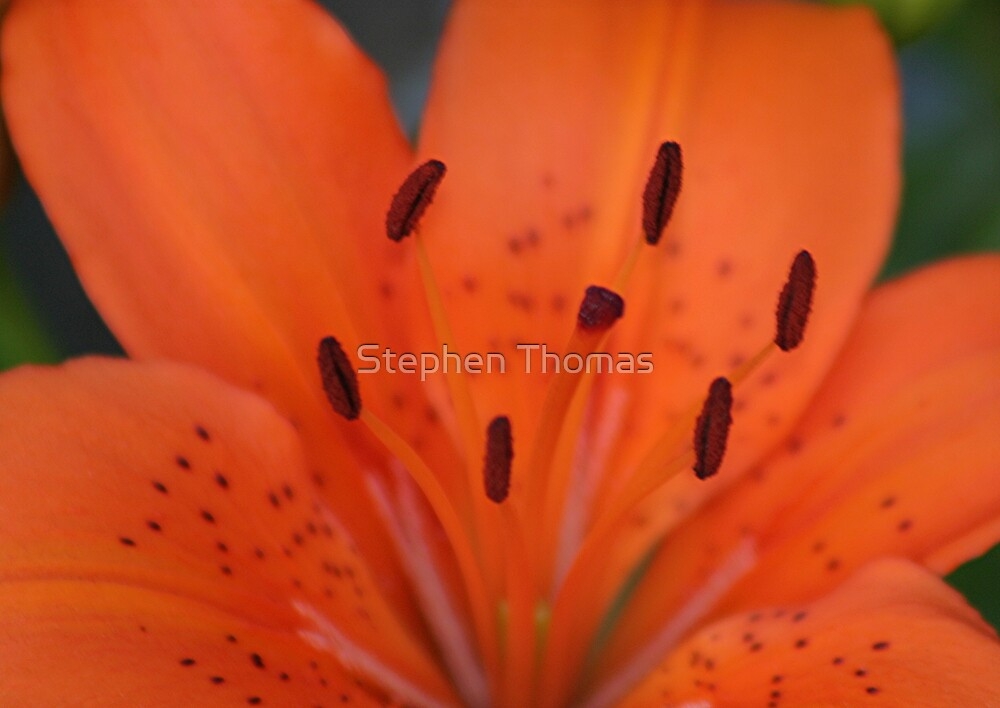 FIRE! by Stephen Thomas