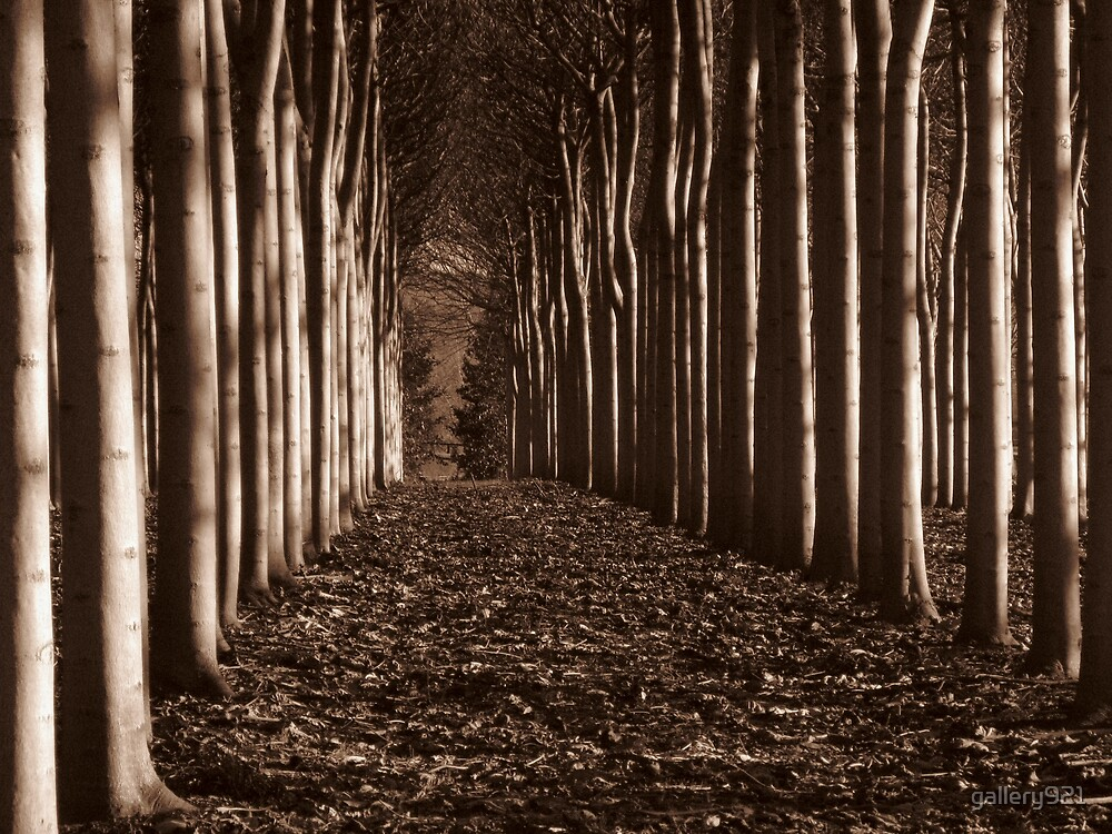 sepia forest by gallery921
