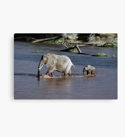 Follow me Canvas Print