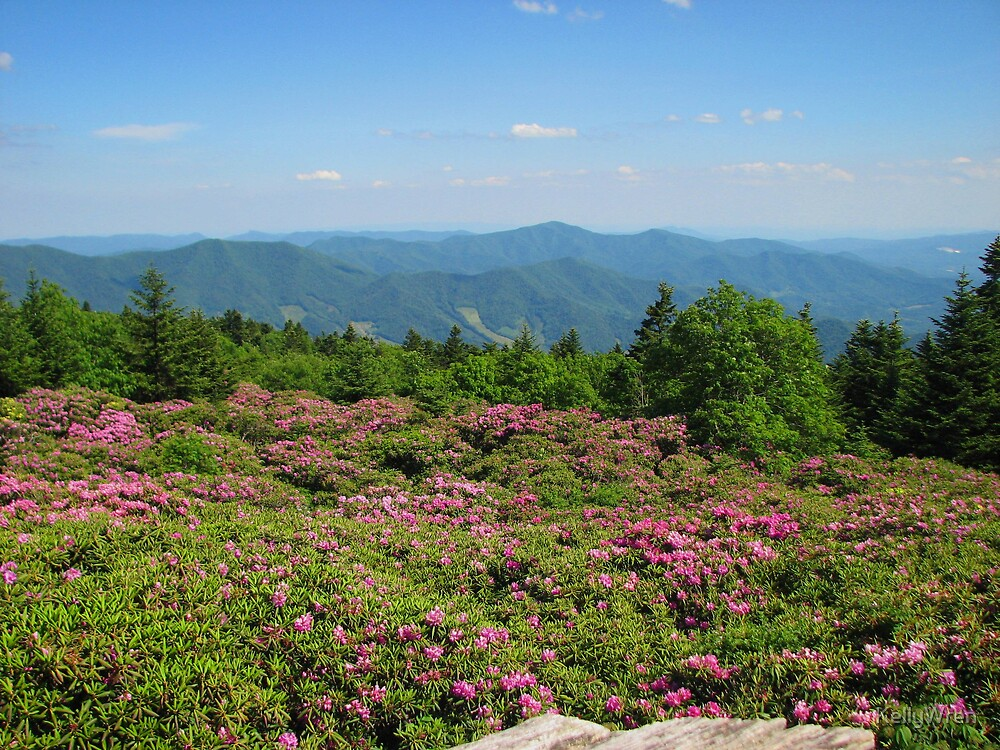 Quot Roan Mountain State Park Rhododendron Gardens Quot By