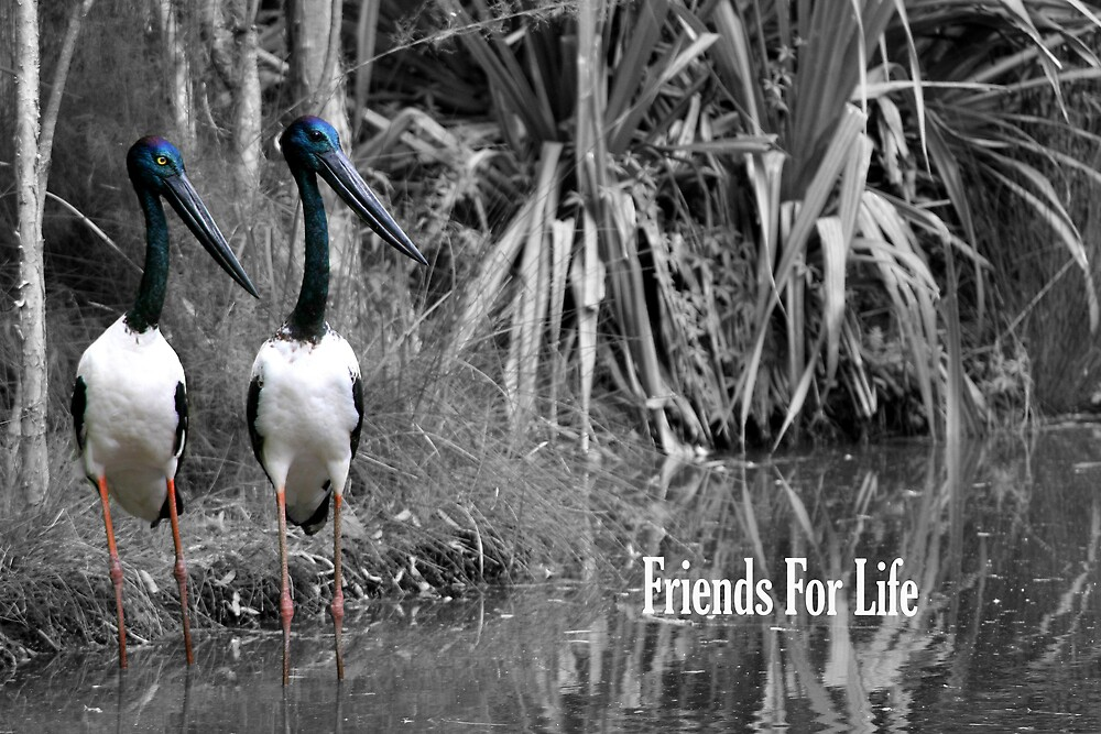 Friends For Life (GC) by Dave Law