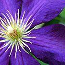 Purple Passion by Joanne  Bradley