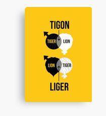 Tigon, liger Canvas Print