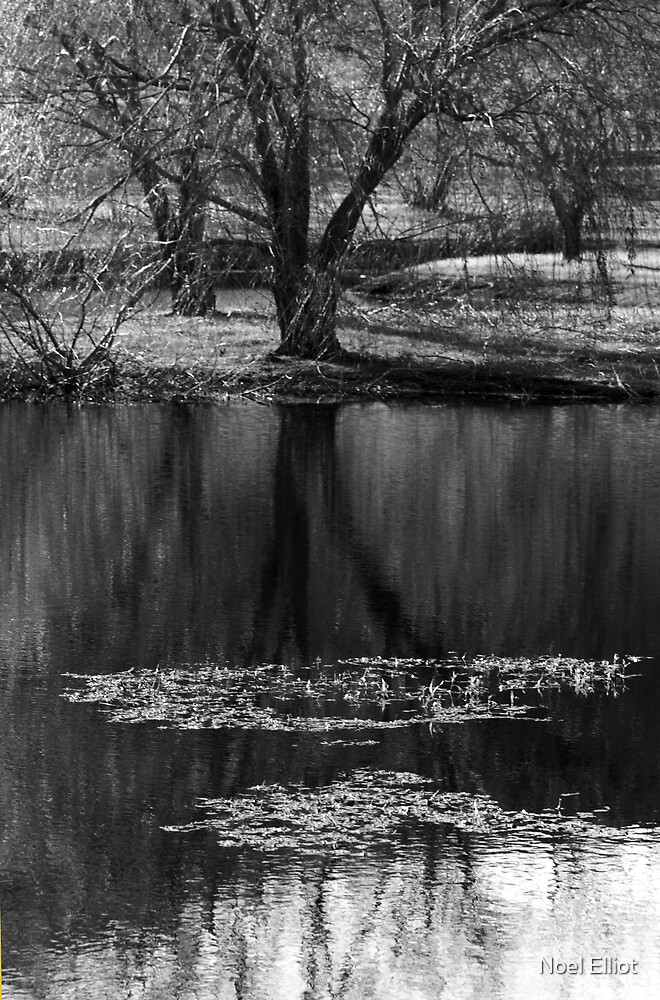 Willow Reflections by Noel Elliot