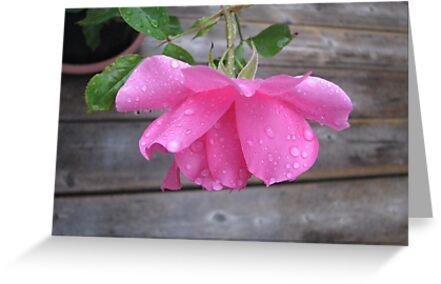 My Rose #2 by gypsykatz