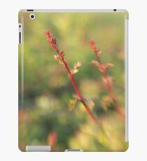 Downland Lensbaby 2 iPad Case/Skin