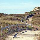 Beach Trail by phil decocco