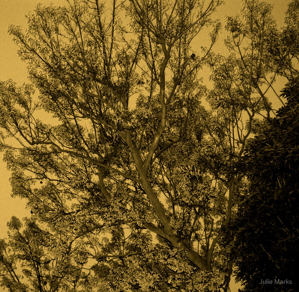 Sepia Tree by Julie Marks