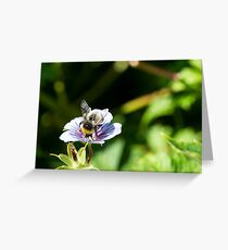 Bee on a flower in Summer Greeting Card