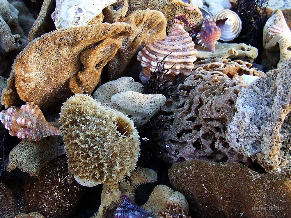 """""""Sponges and Shells"""".. by debsphotos"""