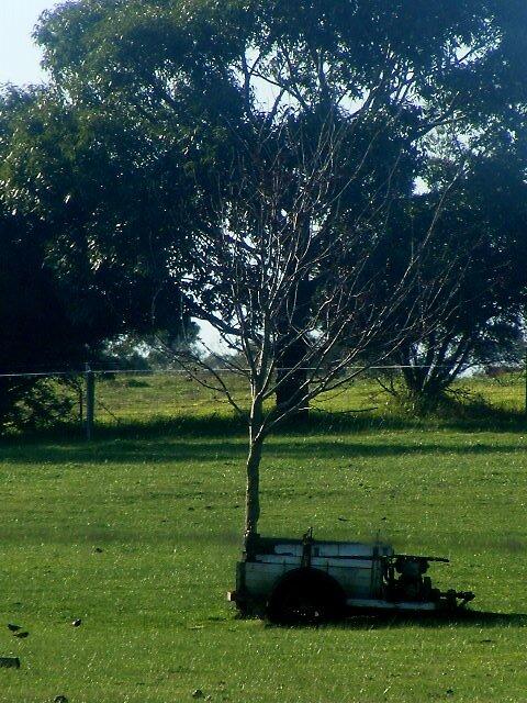 tree6 by keara