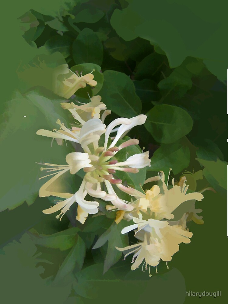 abstract of Honeysuckle by hilarydougill