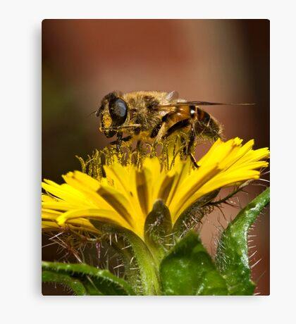 Pollen Feast Canvas Print