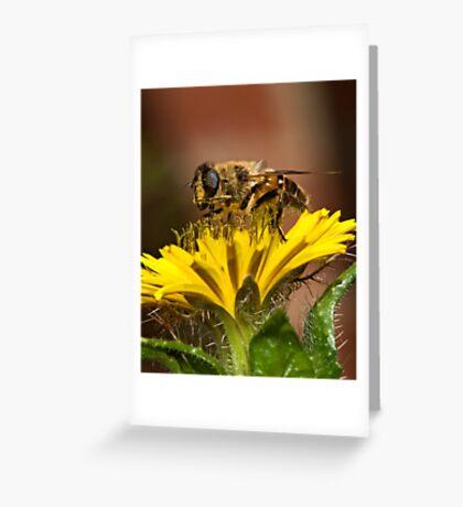 Pollen Feast Greeting Card