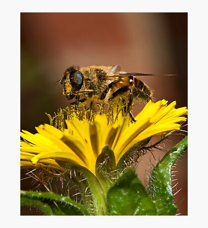 Pollen Feast Photographic Print